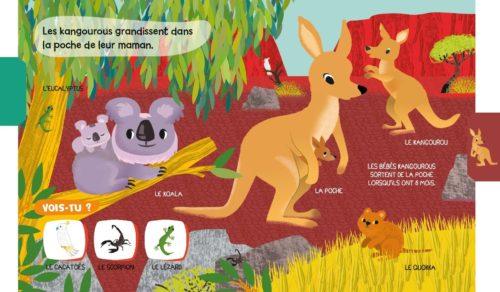 bébés kangourous