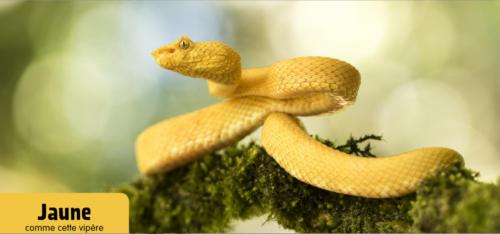jaune-vipère
