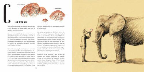 Elephants-cerveau